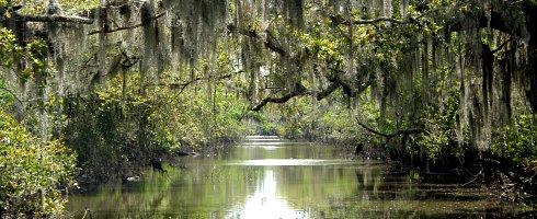 louisiannaswamp