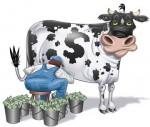 cash-cow-783681