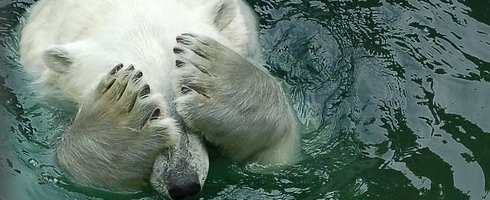 you make polar bear cry