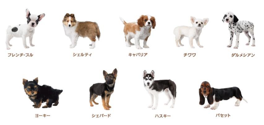 dog breeds game