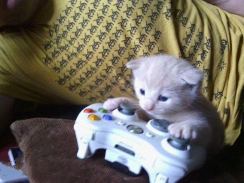 kitten_xbox
