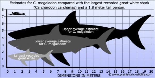 megalodon-size