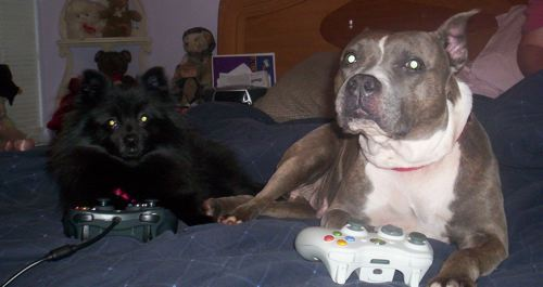 dogs-video-games-jpg
