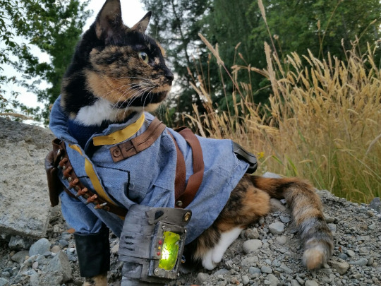 fallout_cat_cosplay_1