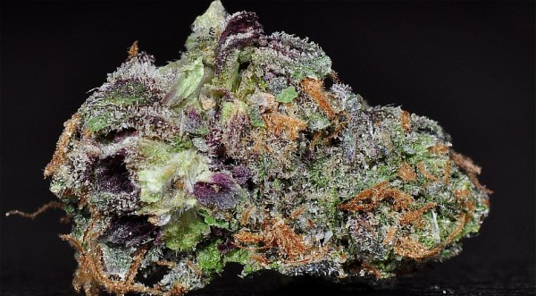 lovely_bud_with_folgers_crystals