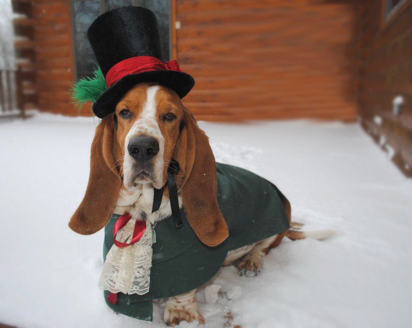 30-Extraordinary-Christmas-Pet-Clothing-and-Accessory-Pieces-10