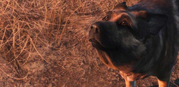 fallout_4_dogmeat