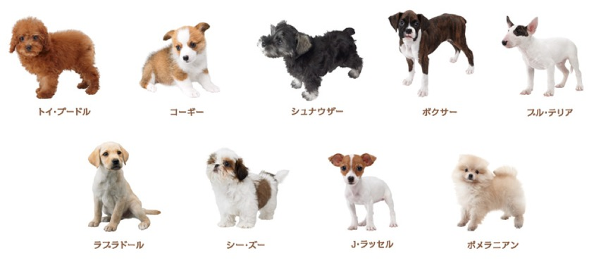 nintendogs cats website updated with a list of breeds. Black Bedroom Furniture Sets. Home Design Ideas