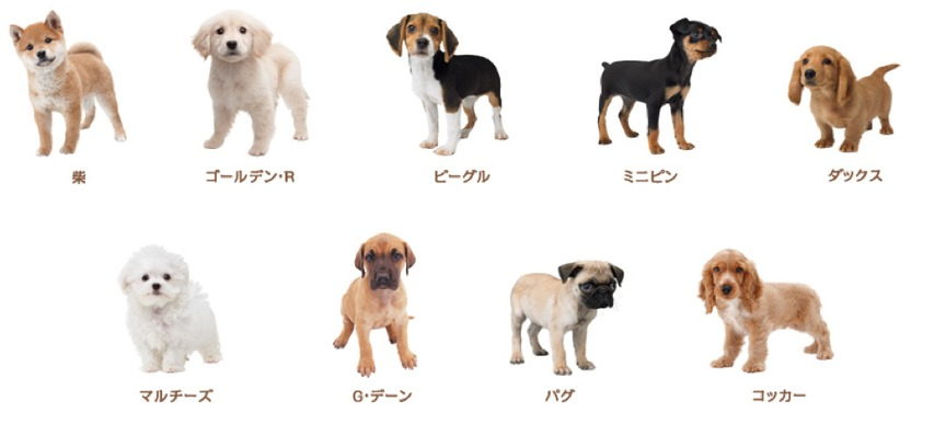 All The Dog Breeds In Nintendogs