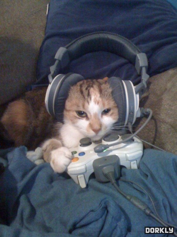 Kitty Play Games