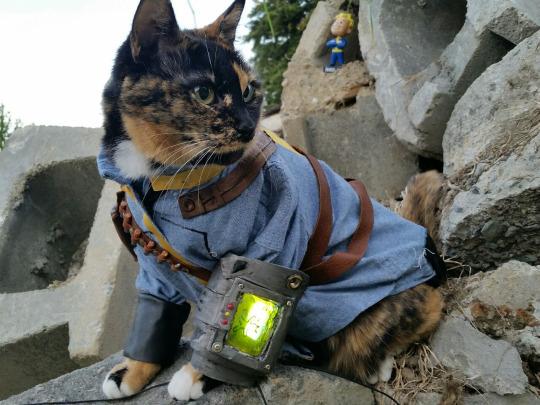 Vault Cat Proves Felines Aren T Extinct In The Fallout